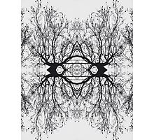Abstract Tree Reflection Photographic Print