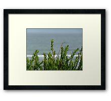 Coast guard: Torquay, Australia Framed Print