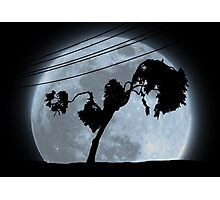 Limbo Tree Photographic Print
