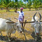 Ploughing with bullocks by indiafrank