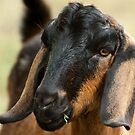 0705 Young Goat by DavidsArt