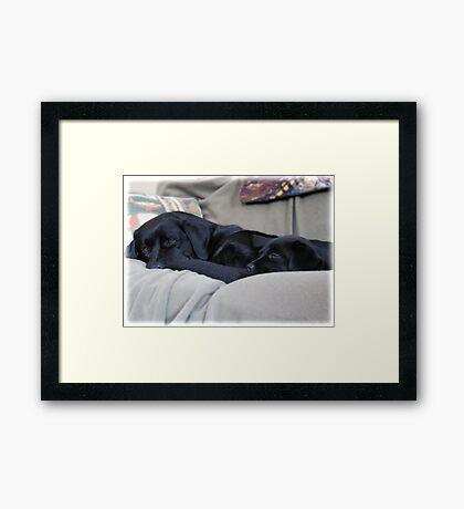 By Your Side - Black Labrador Framed Print