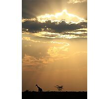 Giraffe Background - Sky Light Wanderer Photographic Print