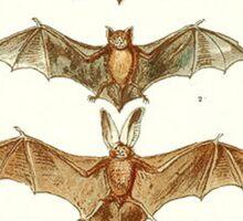 Bat Anatomy Book Plate Sticker