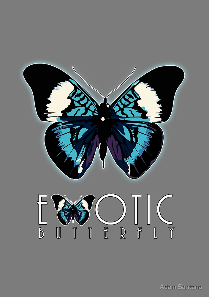 Exotic Butterfly 2 by Adamzworld