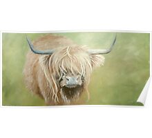 Hairy coo (cow) in grass Poster