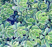 Flowers background by mayalenka