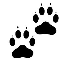 Pawprints Silhouette Photographic Print