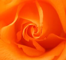 Beautiful Orange Rose by Mythos57