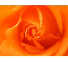Beautiful Orange Rose Photographic Print