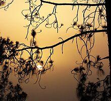 Sun in Swing by Ikramul Fasih