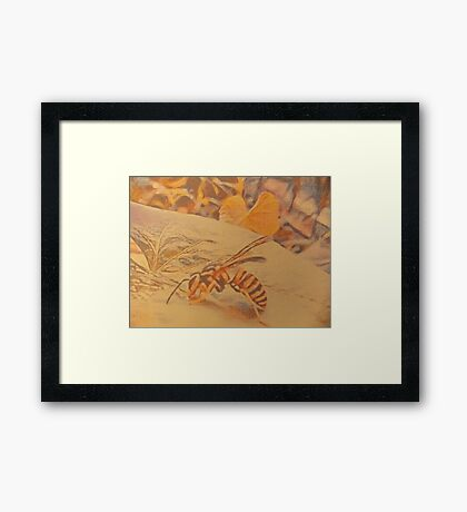 Wasp On A Leaf Drinking Water. Framed Print