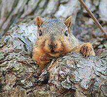 Red Squirrel by Jeff VanDyke