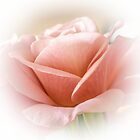 soft romantic rose by Nicole W.