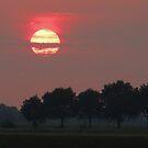 A Warm Summer Sunset by ienemien