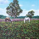Horses and Heather in the New Forest by martyee