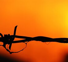 Barbed wire by bexgodfrey
