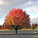 Fall Spectacle by phil decocco
