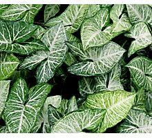 Botanical green leaves Photographic Print