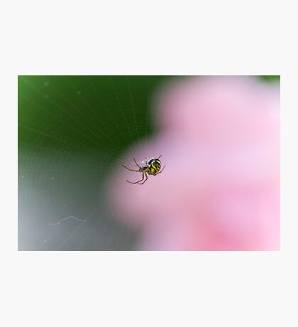 spider in the web Photographic Print