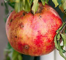 pomegranate by spetenfia