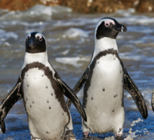 funny image of  four walking African Penguin Sticker