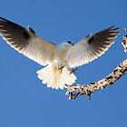Smooth Landing... by Chris Kean
