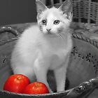 Misty With Apples by Kenneth Hoffman