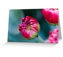 chrysanthemum in the garden Greeting Card