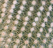 succulent plant by spetenfia