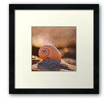 Shell bokeh Framed Print