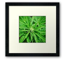 Marijuana Cannabis Weed Pot Plant Framed Print