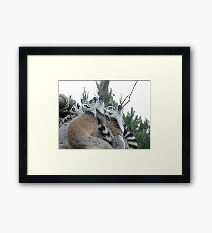 Who Ordered The Spaceship? Framed Print