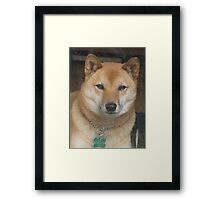 Sporty, at his best Framed Print