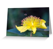 bee on buttercup Greeting Card