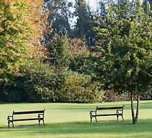 bench in the park by spetenfia
