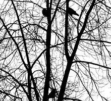 Birds on the fall trees by Anatoliy Spiridonov