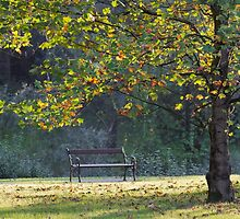 bench and tree in the park by spetenfia