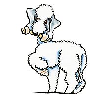 Bedlington Terrier Rosie Photographic Print