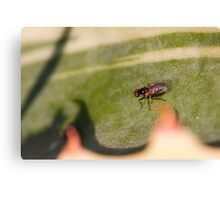 Fly on the leaf of agave Canvas Print