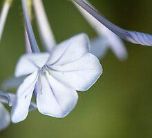 flower in the garden by spetenfia