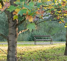 tree in the park by spetenfia