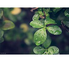 Fresh leaves Photographic Print