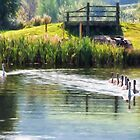 Family of Swans ~ Impressions by Susie Peek