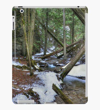 Valley of the Fallen Trees iPad Case/Skin