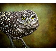 The Burrowing Owl  Photographic Print