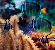 Tropical fish by LudaNayvelt