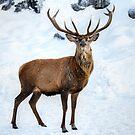 Red Deer Pride... by Poete100