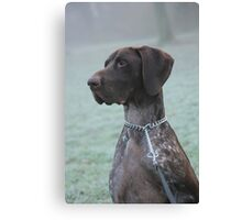 Glossy Grizzly German Shorthaired Pointer Canvas Print