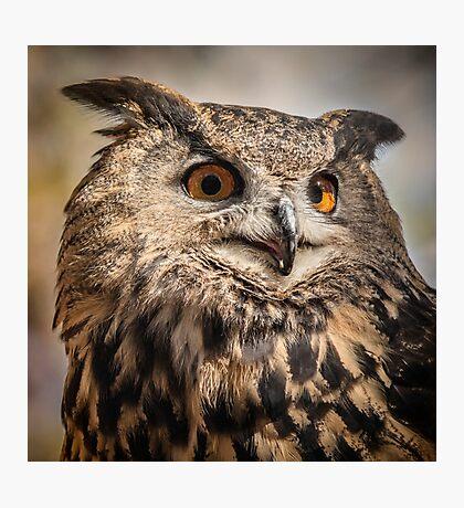Eurasian Eagle Owl Portrait  Photographic Print